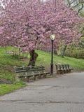 中央公园,纽约春天 免版税库存图片