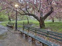 中央公园,纽约春天 免版税图库摄影