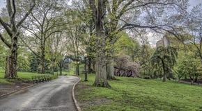 中央公园,纽约春天 库存图片