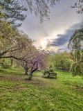中央公园,纽约春天 免版税库存照片