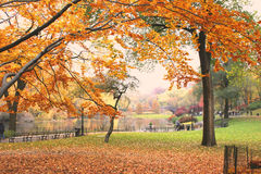 中央公园 图库摄影
