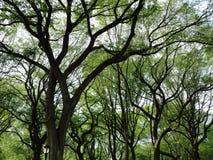 中央公园 免版税库存图片