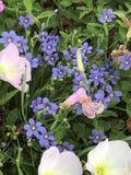 中央得克萨斯的野花 库存照片