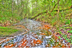 中央河风景树昂贵的新增效益。 免版税库存图片