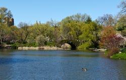 中央湖公园 库存图片