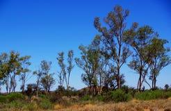 中央澳大利亚沙漠场面 库存照片