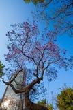 中央阿拉米达公园紫色树和摩天大楼 免版税库存图片