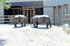 中央FL动物园在桑福德FL 免版税库存照片