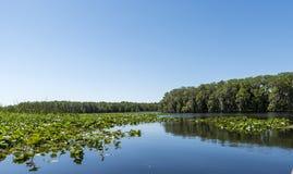 中央Florida湖 免版税库存图片