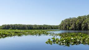 中央Florida湖 库存照片