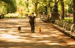 中央nyc公园 库存图片