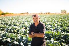 中年人用有机沙拉圆白菜在一个菜园里 农业 免版税库存图片