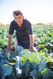 中年人用有机沙拉圆白菜在一个菜园里 农业 免版税库存照片