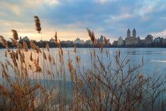 中心城市新的公园日落约克 免版税库存照片