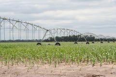 中心枢轴灌溉很好缩短的末端 库存照片