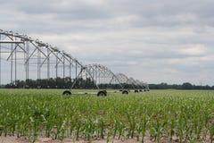 中心枢轴灌溉很好被节略的末端 免版税库存图片