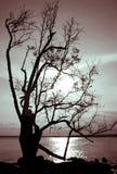 中断的剪影结构树 库存图片