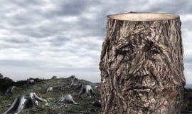 中断的森林 免版税图库摄影