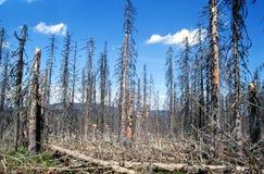 中断的森林 库存照片