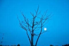 中断的结构树和过帐 免版税库存照片