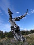 中断的结构树 免版税库存图片