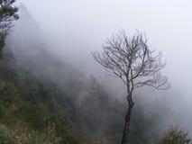 中断的结构树 免版税图库摄影
