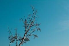 中断的结构树 图库摄影