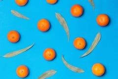 中看不中用的物品蓝色圣诞节构成玻璃 混杂的新鲜的柑橘水果和eucaliptus叶子在蓝色背景舱内甲板位置,顶视图 免版税库存图片