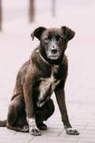 中等大小被混合的品种无家可归的狗室外坐街道 免版税库存图片