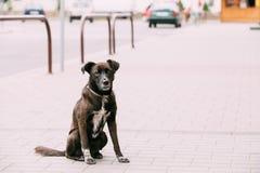 中等大小被混合的品种无家可归的狗室外坐街道 免版税库存照片