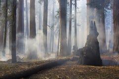中等森林火灾 免版税图库摄影