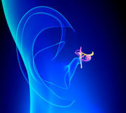 中耳详述了与羽翼的解剖学在蓝色背景 免版税图库摄影