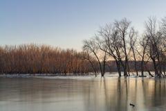 中西部冬天日落 库存图片