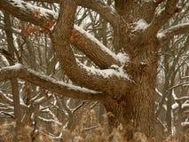 中西部冬天森林场面 库存图片