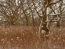 中西部冬天森林场面 免版税库存图片