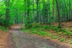 中间纬度的美丽的森林 图库摄影