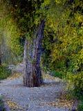 中间结构树 库存照片