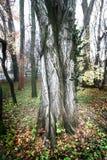 中间结构树 免版税库存照片