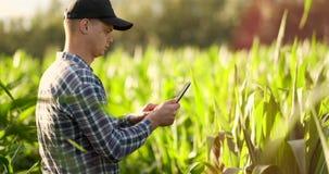 中间计划侧视图:有片剂计算机的男性农夫在领域和新闻中的检查植物他的在的手指 股票视频
