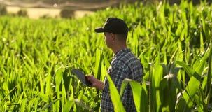 中间计划侧视图:有片剂计算机的男性农夫在领域和新闻中的检查植物他的在的手指 股票录像