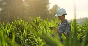中间计划侧视图:有片剂计算机的男性农夫在领域和新闻中的检查植物他的在的手指 影视素材