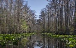 中间叉子Suwannee河红色足迹, Okefenokee沼泽全国野生生物保护区 库存照片