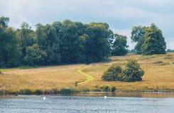 中间夏天自然,英国 图库摄影