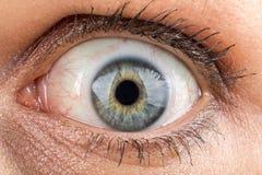 中年妇女眼睛宏指令 免版税库存照片