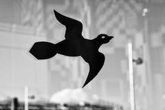 从击中玻璃的Protectionfor鸟 鸟掠食性动物贴纸  免版税库存照片