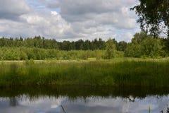 中间车道池塘的森林有蓝天的和水晶浇灌 免版税库存照片