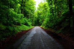 中间道路穿过森林 图库摄影