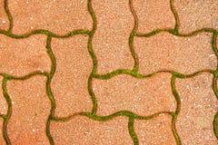 中间鹅卵石路面-绿色青苔 库存图片