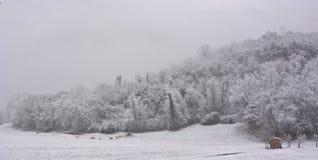 丰富地下雪,并且风景成为圣诞节 免版税库存图片
