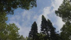 丰富的树围拢的白色云彩反对美丽的清楚的天空 在背景天空视图的绿色树从 免版税库存照片